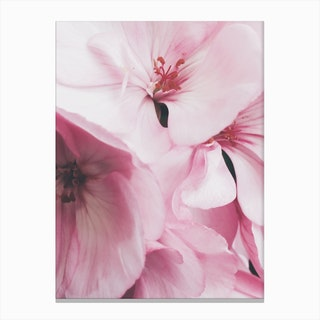 Pink Flowers Photo Canvas Print