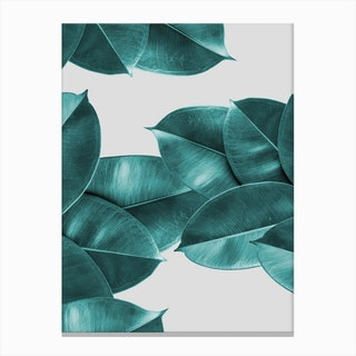 Green Ficus Leaves Canvas Print