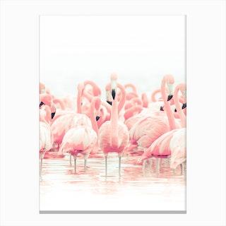 Flamingo Flock Canvas Print