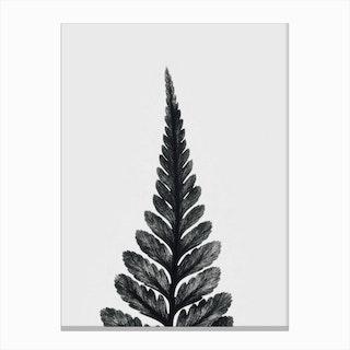 Botanical Fern  I Canvas Print