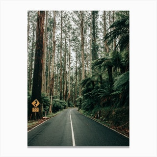 Endless Road Of Black Spur In Australia Canvas Print