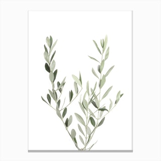 Botanical III Canvas Print