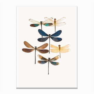 Insects X Canvas Print