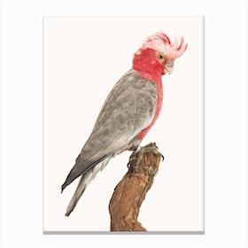 Birds II Canvas Print