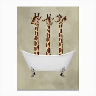 Giraffes In Bathtub Canvas Print