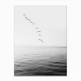 Birds And Ocean Canvas Print