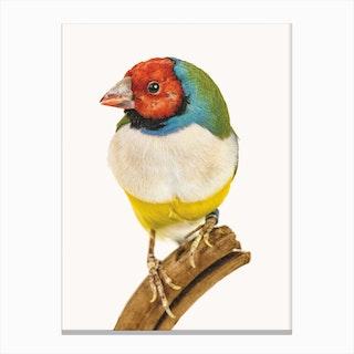Birds VI Canvas Print