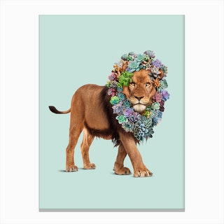 Succulent Lion Canvas Print