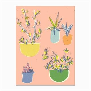 Plants On The Terrace Canvas Print