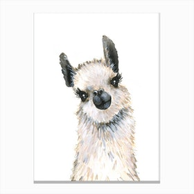 Baby Llama Canvas Print