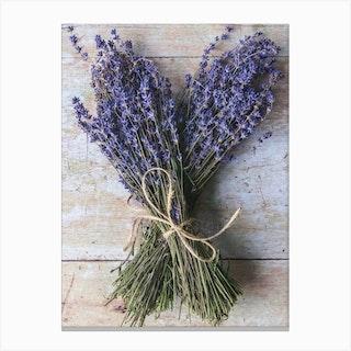 Dried Lavender Canvas Print