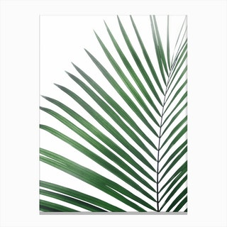Palm Leaf Green Canvas Print