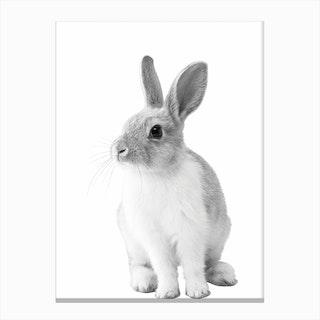 Monochrome Bunny Canvas Print