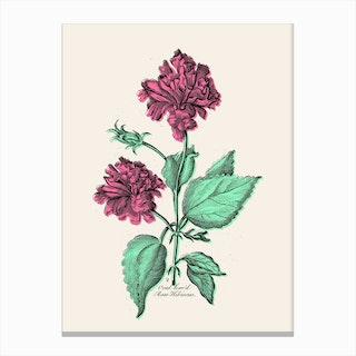 Rose Hibiscus Canvas Print