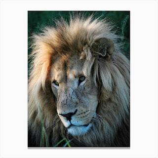 Lion Portrait Color Canvas Print