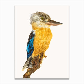 Birds VII Canvas Print
