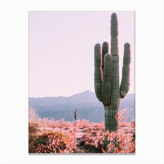 Desert Cactus Photo Canvas Print