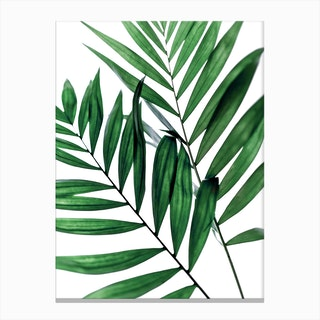 Leaves 5 Canvas Print