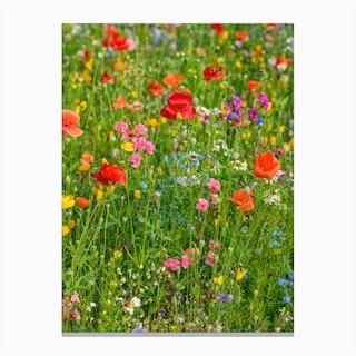 Field of Wild Flowers 2 Canvas Print