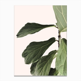 Indoor Plant Canvas Print