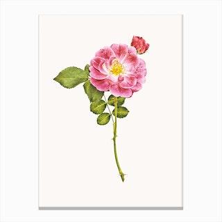 Roses V Canvas Print