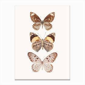 Butterflies VI Canvas Print