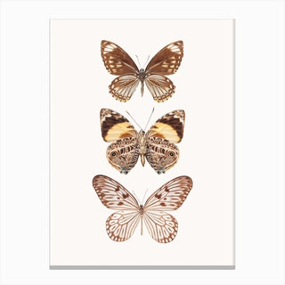 Butterflies VI Canvas Print