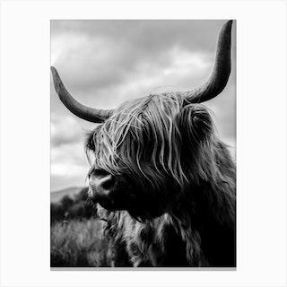 Scottish Highland Cattle Black And White Canvas Print