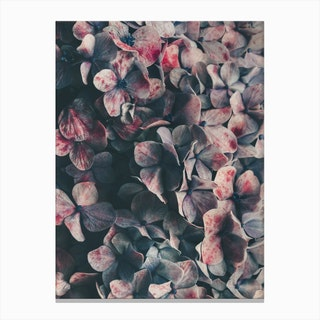 Flowers - Moody Blues Canvas Print