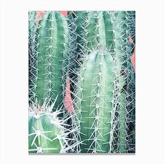 Cactus Up Close In Canvas Print