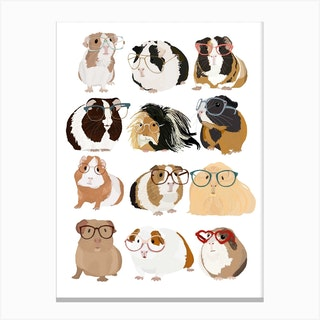Guinea Pig With Glasses Canvas Print