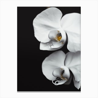 Orchid V Canvas Print