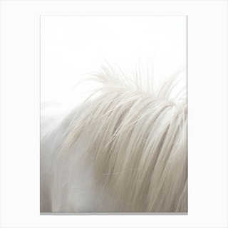 Horses Mane Canvas Print