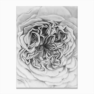 A Rose Is A Rose Black Canvas Print