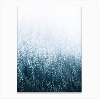 Moody Forest In The Fog Canvas Print