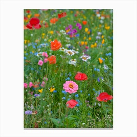 Field of Wild Flowers 1 Canvas Print