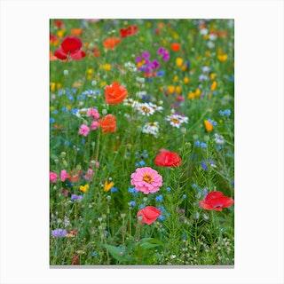 Field of Wild Flowers 1 Canvas Print