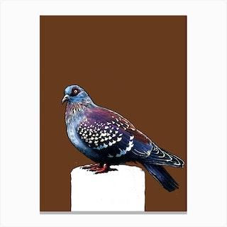 The Pigeon On Roast Peach Canvas Print