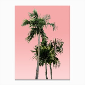 Palm Trees on Pink Canvas Print