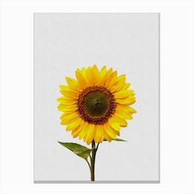 Sunflower Still Life Canvas Print