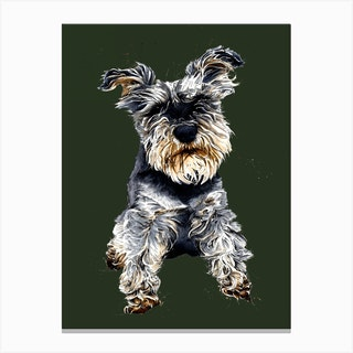 Ollie The Schnauzer Canvas Print
