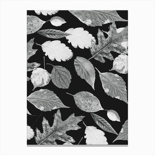 Leaves BW Canvas Print