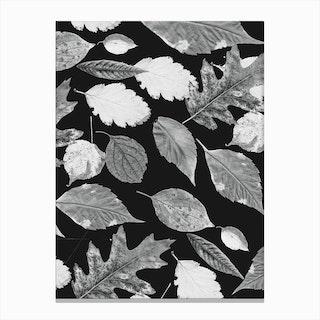 Leaves BW Canvas Print