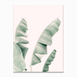 Banana Leaf Pastel Canvas Print