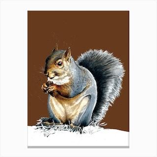 The Grey Squirrel On Roast Peach Canvas Print