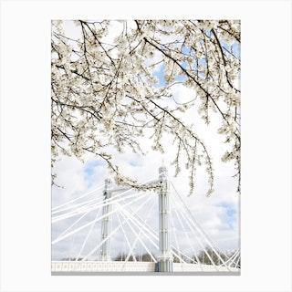 Albert Bridge Blossom Canvas Print