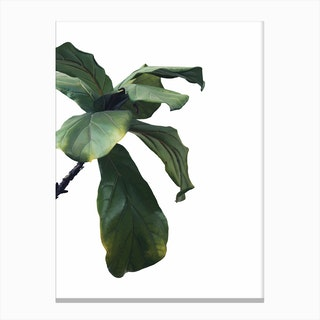 Green Plant Head Canvas Print