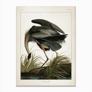 Vintage Audubon 1 Great Blue Heron Canvas Print