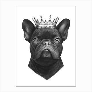 King French Bulldog Canvas Print