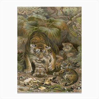 Vintage Brehm 1 Tiger Canvas Print
